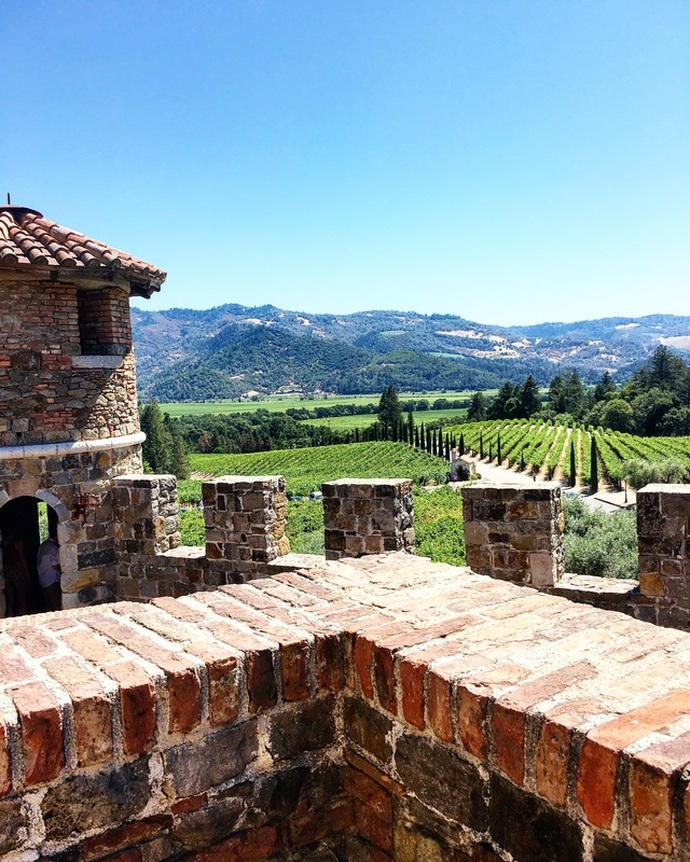 Looking out on the the vineyard at Castello Di Amorosa